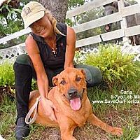Adopt A Pet :: Carla - Eustis, FL