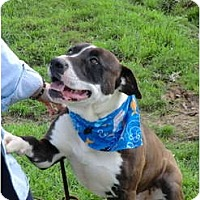 Adopt A Pet :: Cooper - Mr. Happy! - Sacramento, CA