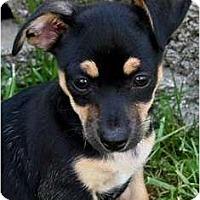 Adopt A Pet :: Sebastian - San Jose, CA