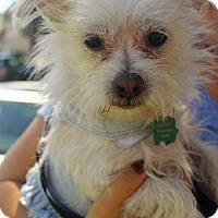 Adopt A Pet :: Jenny - Costa Mesa, CA