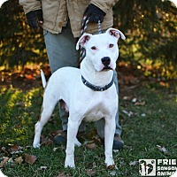 Adopt A Pet :: Naya - Springfield, IL