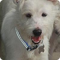 Adopt A Pet :: Dover-Adoption pending - Norwalk, CT