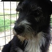Adopt A Pet :: Terri - Quinlan, TX