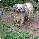 Adopt A Pet :: Waddles