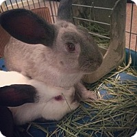 Adopt A Pet :: Lizzie & Darcy - Los Angeles, CA
