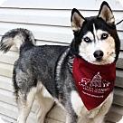 Adopt A Pet :: Liko *Has Application*