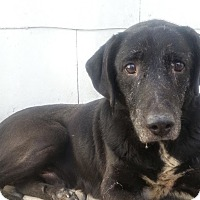 Adopt A Pet :: Rebel*Sweet senior!* - Chicago, IL