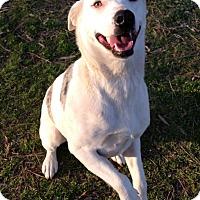 Australian Cattle Dog Mix Dog for adoption in E. Greenwhich, Rhode Island - Luna