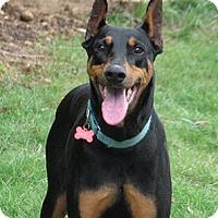 Adopt A Pet :: Sable - Salem, OR