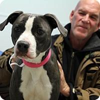 Adopt A Pet :: Angel-Prison Graduate - Elyria, OH