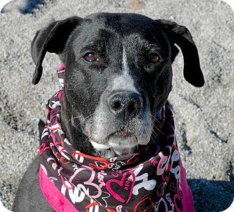 Labrador Retriever Mix Dog for adoption in Delaware, Ohio - Betsy