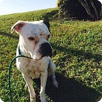Adopt A Pet :: Hailey - Austin, TX
