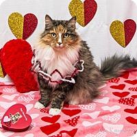 Adopt A Pet :: Nala - Burlingame, CA