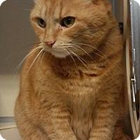 Adopt A Pet :: JJ - Franklin, NH