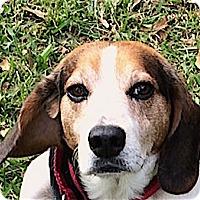 Adopt A Pet :: Jud - Houston, TX