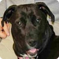 Adopt A Pet :: Ebony - Medford, MA
