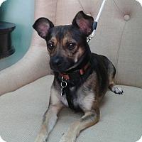 Adopt A Pet :: Daniel - Thousand Oaks, CA