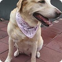 Adopt A Pet :: Meece - Windermere, FL
