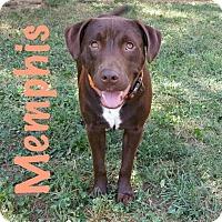 Adopt A Pet :: Memphis - Charlotte, NC
