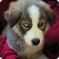Adopt A Pet :: Harper - Normandy, TN