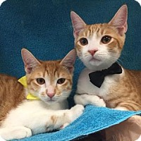 Adopt A Pet :: Alvin and Apollo - Yorba Linda, CA