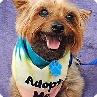 Adopt A Pet :: Mojo - Omaha, NE