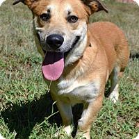 Adopt A Pet :: Reo D3319 - Shakopee, MN