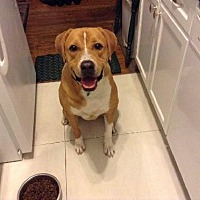 Adopt A Pet :: Lennon - Whitestone, NY