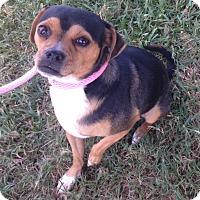 Adopt A Pet :: Benny - Dallas, TX
