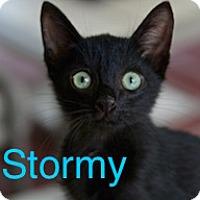 Adopt A Pet :: Stormy - Satellite Beach, FL