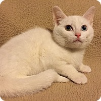 Adopt A Pet :: Casper - Woodstock, ON