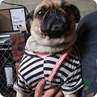 Adopt A Pet :: Penny - Gardena, CA