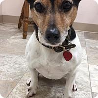 Adopt A Pet :: Cohen - Urbana, OH