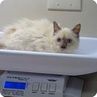 Adopt A Pet :: 328810 - Wildomar, CA