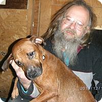 Adopt A Pet :: Amazing Grace - Evensville, TN