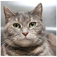 Adopt A Pet :: Elsa - Forked River, NJ