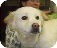 Terrier (Unknown Type, Medium) Mix Dog for adoption in Richmond, Virginia - Cottonball
