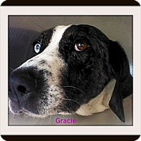 Adopt A Pet :: Gracie - Georgetown, KY