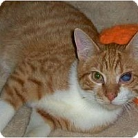 Adopt A Pet :: Chevy - Secaucus, NJ