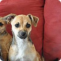 Adopt A Pet :: Rosie - Tumwater, WA