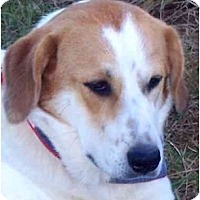 Adopt A Pet :: LOUISE - Wakefield, RI