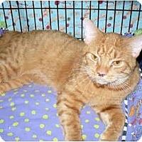 Adopt A Pet :: Ryan - Colmar, PA