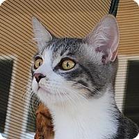 Adopt A Pet :: Archer - Palmdale, CA