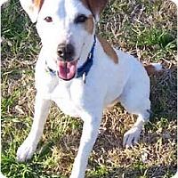 Adopt A Pet :: MYLO - Phoenix, AZ