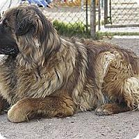 Adopt A Pet :: ELVIS - Glendale, AZ