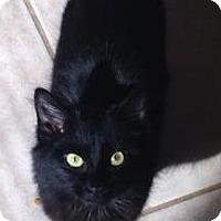 Adopt A Pet :: Amara - St. Louis, MO