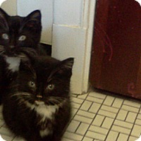 Adopt A Pet :: Belvedere - St. Louis, MO
