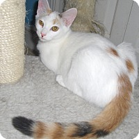 Adopt A Pet :: Sunray - Richmond, VA