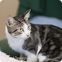 Adopt A Pet :: Trace - Fountain Hills, AZ