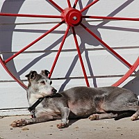 Adopt A Pet :: Blue in Oklahoma - Argyle, TX